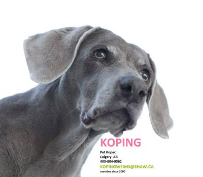 Breeder List - Weimaraner Association of Canada